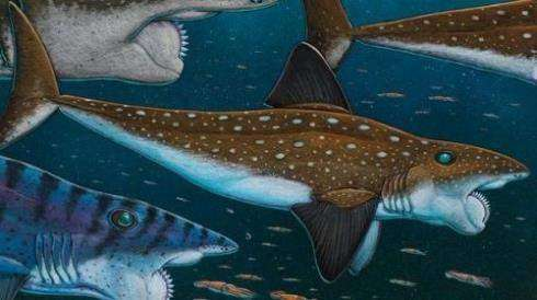 облик Helicoprion